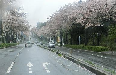 AO20150407桜.jpg