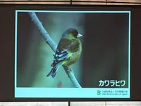 鳥②.jpg