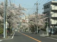 18お花見③-3.jpg