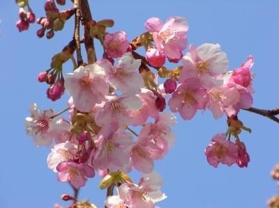 18お花見①-1.jpg