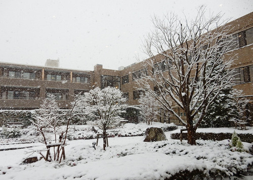 初雪.jpeg