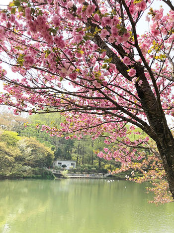 2018.4お花見①.jpeg
